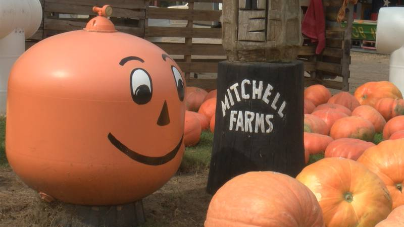 Mitchell Farms prepares to reopen.