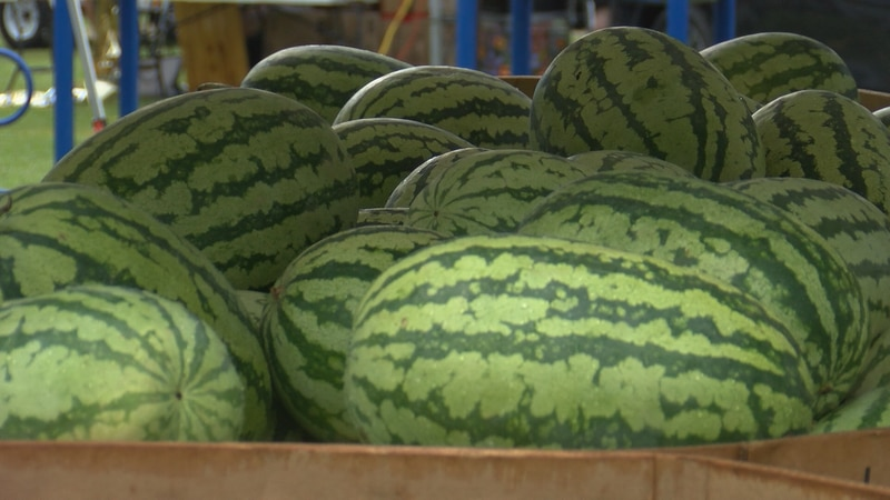 The 43rd annual Mississippi Watermelon Festival began Friday in Mize.