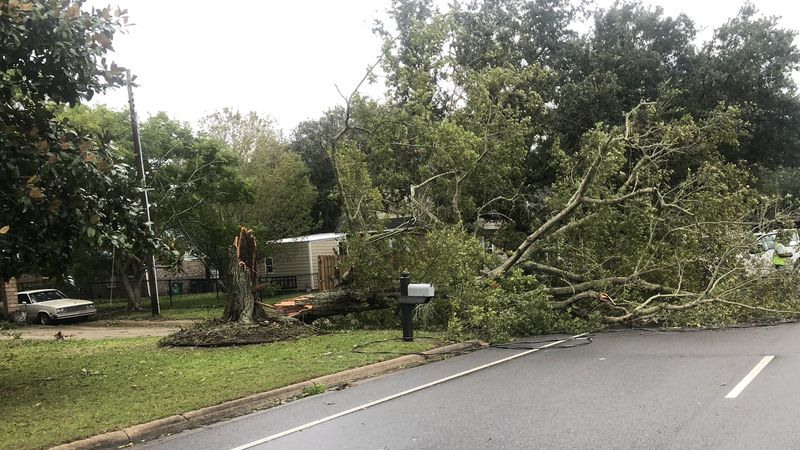 Several trees and power lines are downed throughout South Mississippi as the effects of...