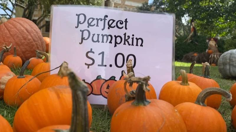 There are various sizes of pumpkins and gourds available. Prices range from $1 to $50.