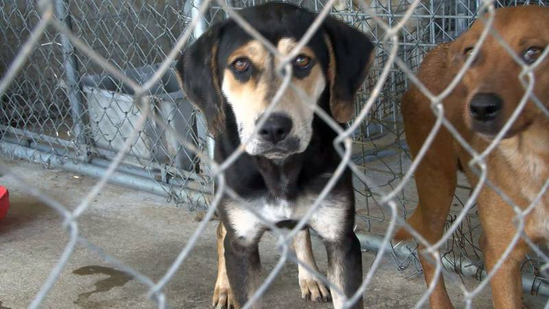Members of Wayne County Animal Rescue went before supervisors Thursday after their support was...