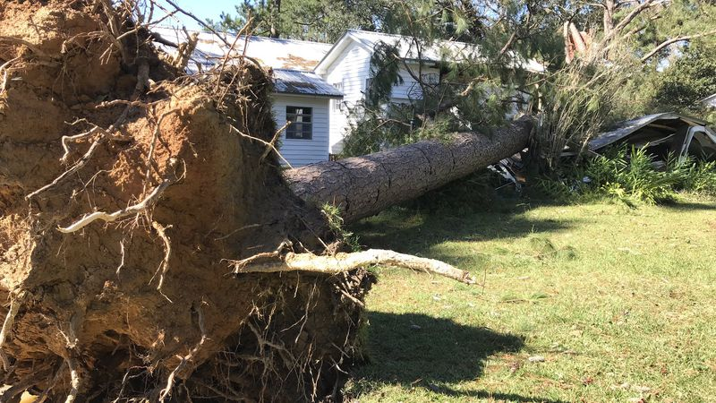 A tree down in Leakesville.