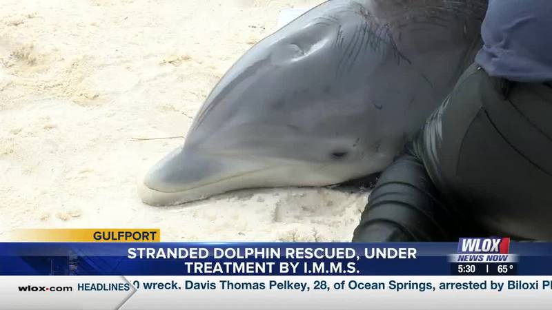 Quick thinking and good Samaritans - those are the reasons why a dolphins that washed up ashore...